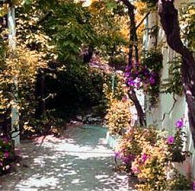 växter nära husgrunden