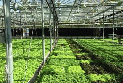 höga laster från växthuset